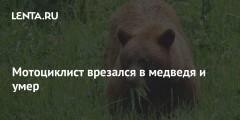 Мотоциклист врезался в медведя и умер