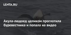 Акула-людоед целиком проглотила буревестника и попала на видео