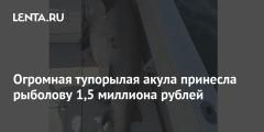 Огромная тупорылая акула принесла рыболову 1,5 миллиона рублей