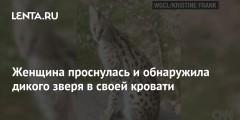 Женщина проснулась и обнаружила дикого зверя в своей кровати