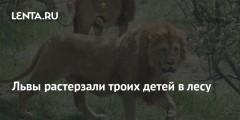 Львы растерзали троих детей в лесу