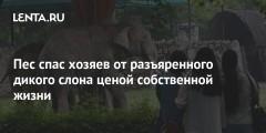 Пес спас хозяев от разъяренного дикого слона ценой собственной жизни
